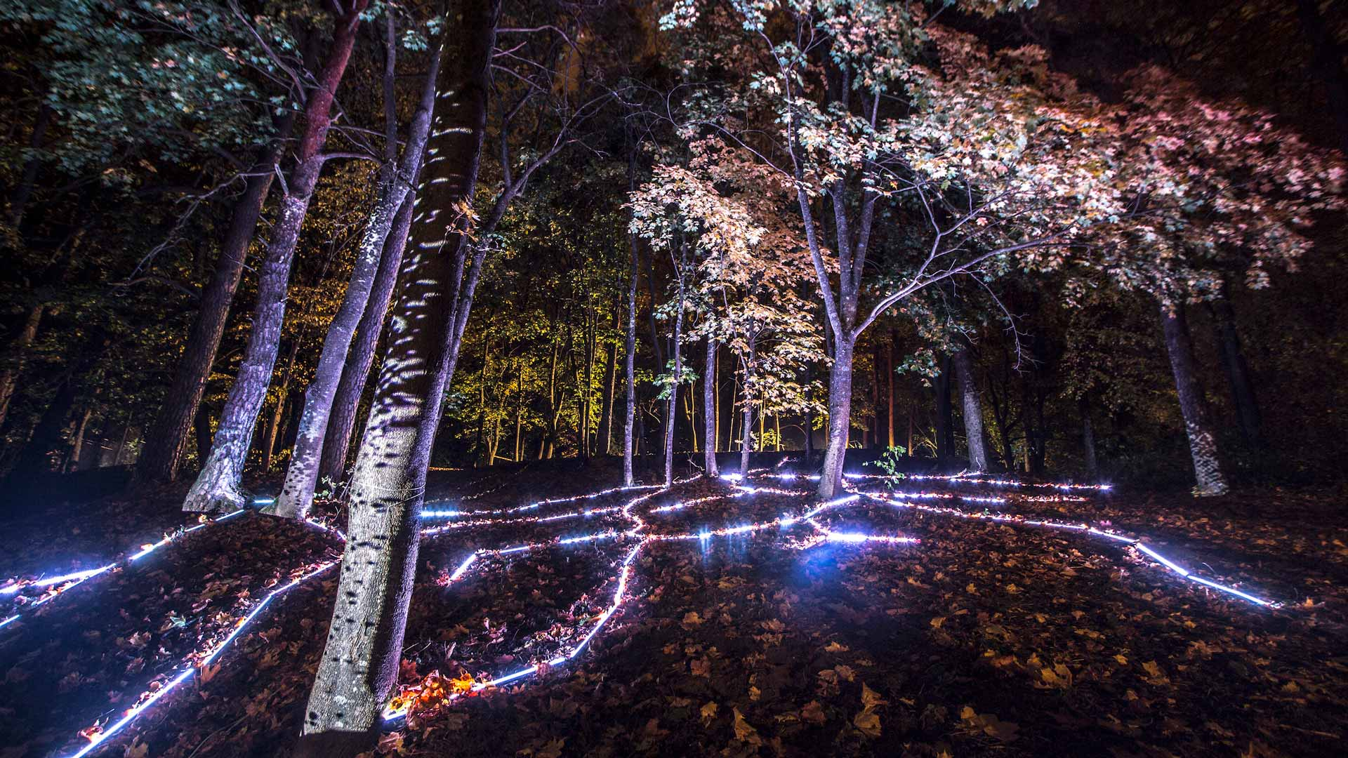 digital forest mapping